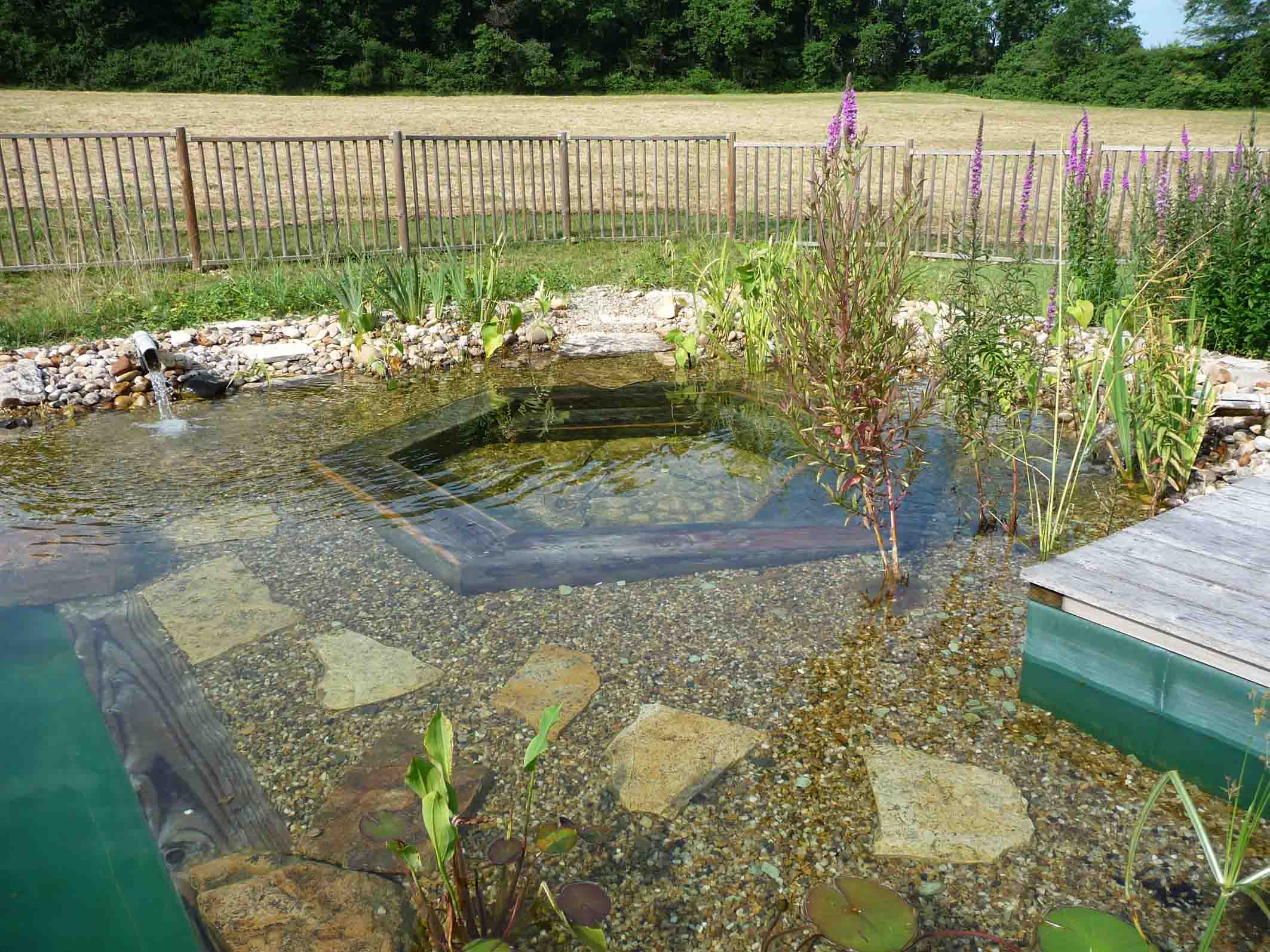 Piscine naturelle dans le jardin le paysagiste for Autoconstruction piscine naturelle