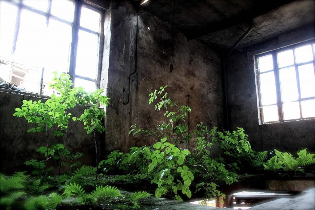 des id es de jardin d 39 int rieur le paysagiste. Black Bedroom Furniture Sets. Home Design Ideas