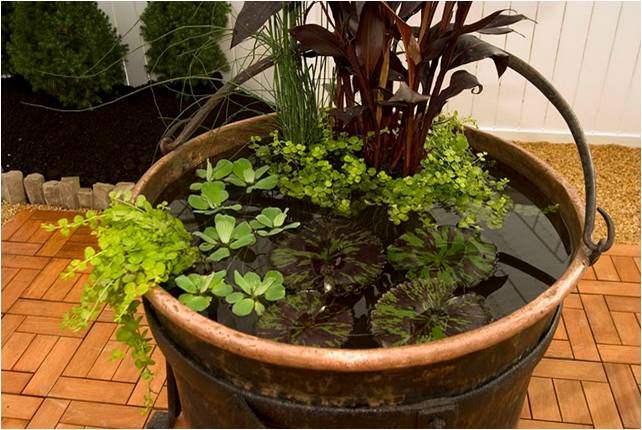 R aliser soi m me son mini jardin d 39 eau le paysagiste - Plantes oxygenantes pour bassin ...