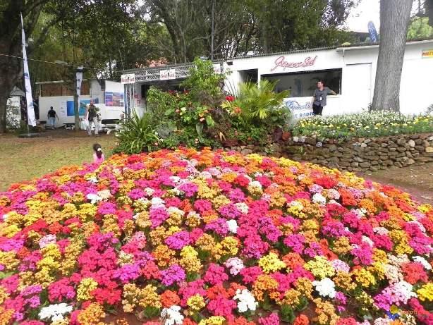 fleur-pour-sa-beaute-visoflora-41321