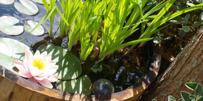 Réaliser soi-même son mini jardin d'eau