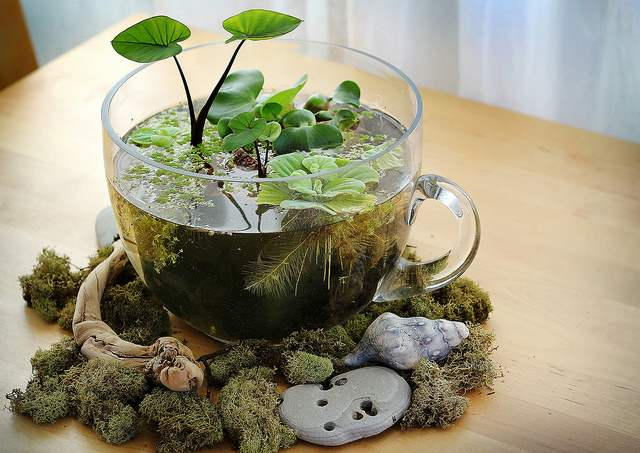 R aliser soi m me son mini jardin d 39 eaule paysagiste - Jardin miniature d interieur ...