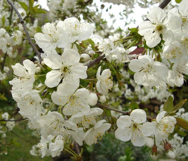 Jardinage au printemps