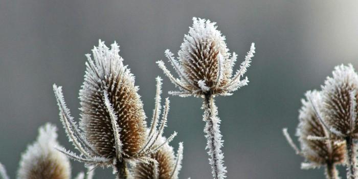 Comment protéger ses plantes du froid ?