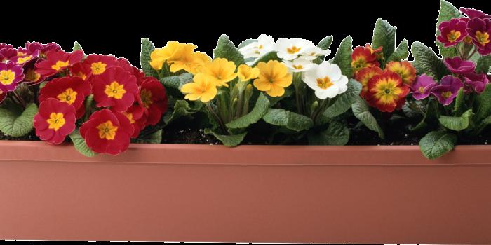 Comment bien choisir le pot pour chaque plante?