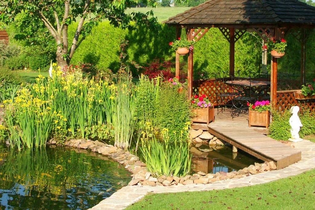 initiation aux plantes de bassin le paysagiste. Black Bedroom Furniture Sets. Home Design Ideas
