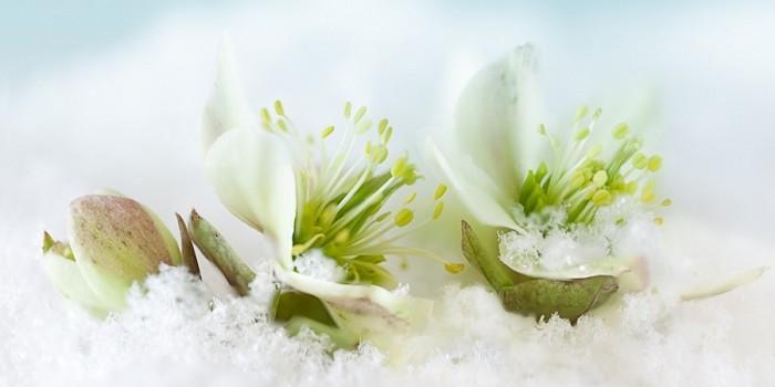 Top 3 des plantes d'intérieur qui fleurissent même en hiver