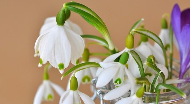 3 fleurs du jardin pour le printemps le paysagiste. Black Bedroom Furniture Sets. Home Design Ideas