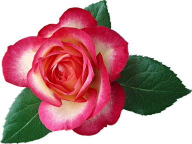 Large_Rose_Clipart_Picture_thumb[2]