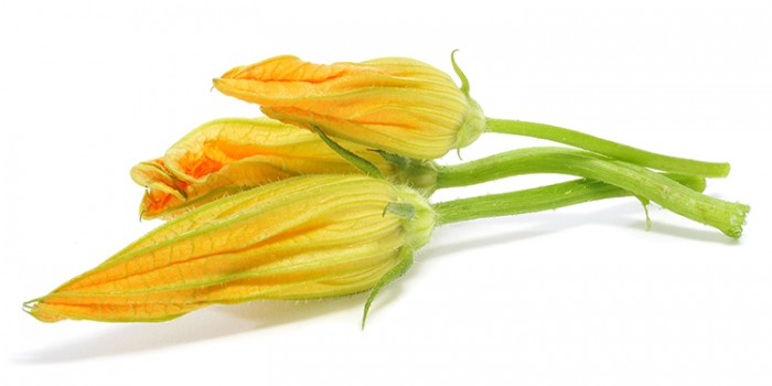 fleurcougettemale