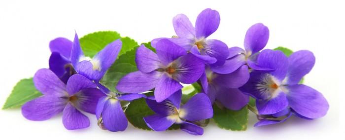violette4