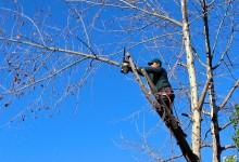 Comment élaguer un arbre en 6 étapes