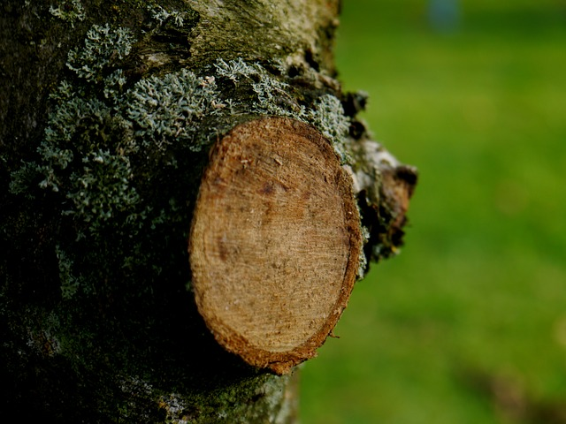 elaguer arbre