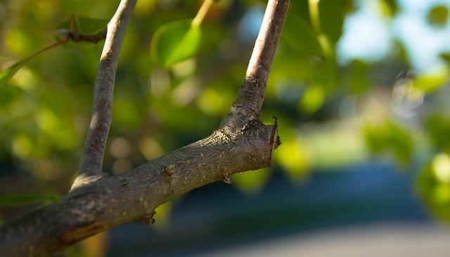 elaguer une branche