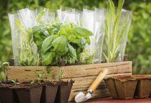 Que faire dans son jardin en avril ?