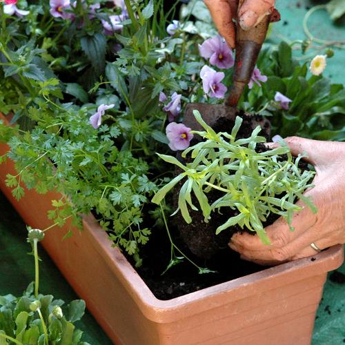 faire-jardiniere-aromatiques-main-10258143