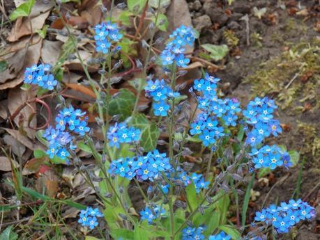 fleurs-jardin-cette-fin-avril-2014-L-rGHdR7