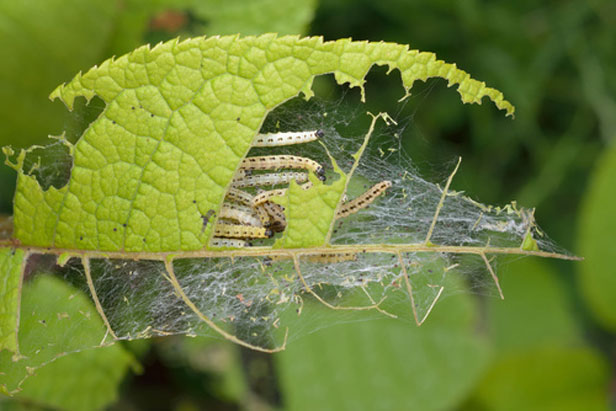 comment se d barrasser des insectes nuisibles sur les. Black Bedroom Furniture Sets. Home Design Ideas