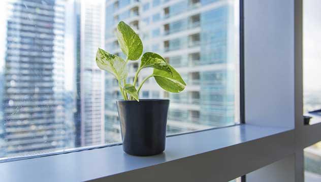 plante-au-bureau