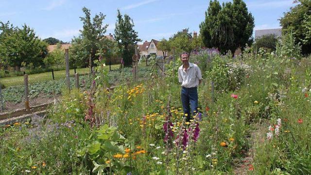 Embellir son jardin avec des plantes sauvagesle paysagiste for Embellir son jardin