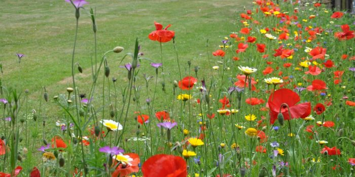 Embellir son jardin avec des plantes sauvagesLe Paysagiste