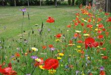 Embellir son jardin avec des plantes sauvages