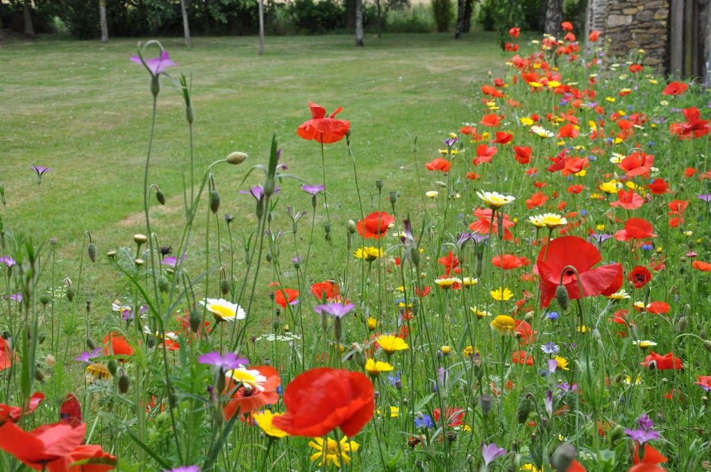 Embellir son jardin avec des plantes sauvages le paysagiste Embellir son jardin