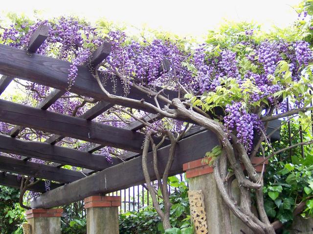 Embellir le jardin avec un abri d coratif le paysagiste - Pergola pour glycine ...
