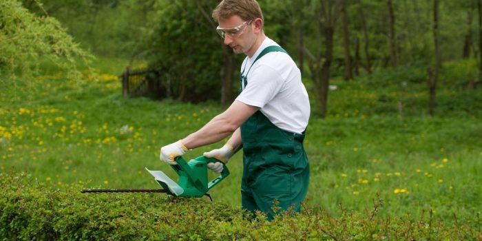 Le taille-haie électrique, un outil indispensable pour le jardinier