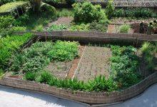 Comment obtenir un jardin naturel sans nuire l'écosystème ?