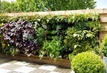 Un mur végétal pour embellir le jardin