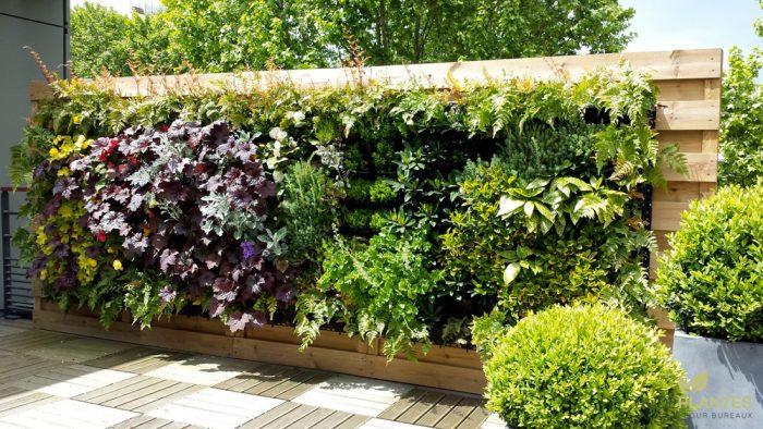 Un mur v g tal pour embellir le jardin le paysagiste for Comment faire un mur vegetal