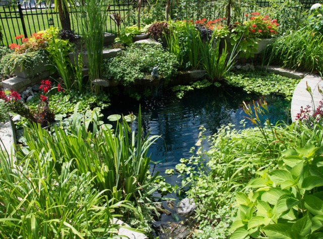 Les plantes aquatiques incontournables dans le jardin le for Point d eau dans le jardin