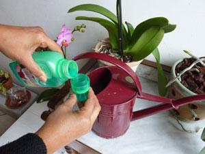 comment viter qu 39 une orchid e ne se fane le paysagiste. Black Bedroom Furniture Sets. Home Design Ideas