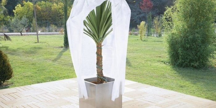 Jardinière : astuces pour protéger les plantes en hiver