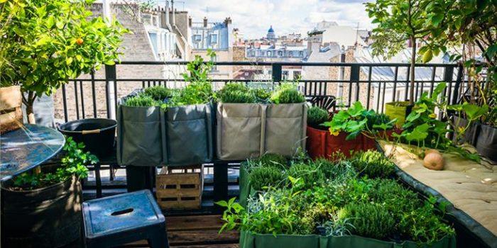 Et si  votre balcon devenait un potager ?