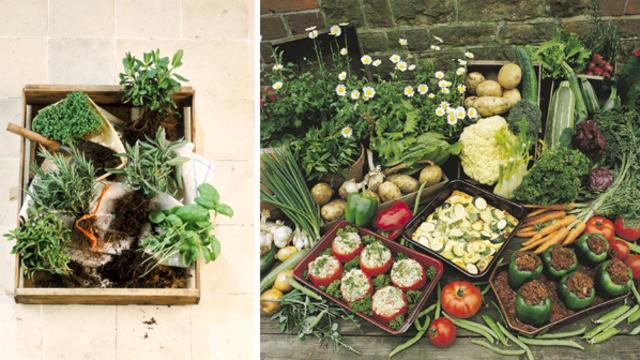 Potager à légumes