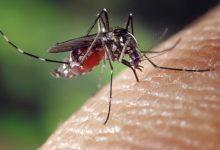 Comment se reproduisent les moustiques dans votre jardin ?