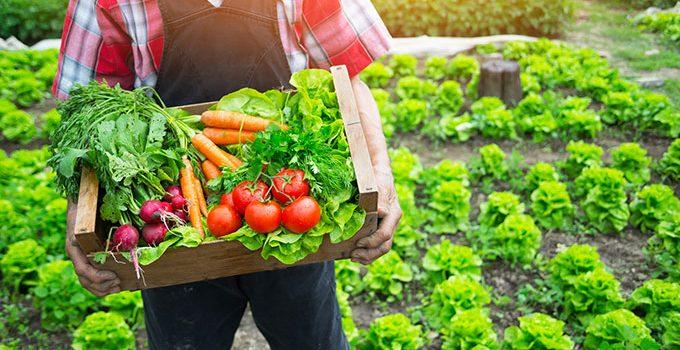Allier jardinage et recyclage, comment y parvenir ?