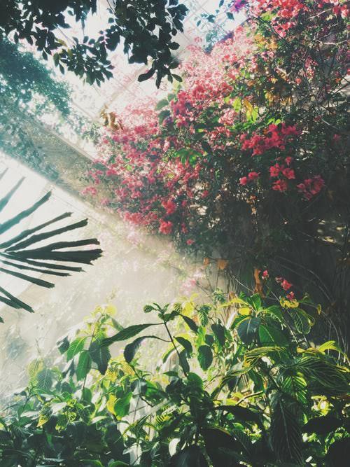 Choisir des plantes adaptées à son jardin