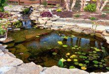 Protégez votre bassin de jardin pour préserver sa beauté