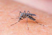 Cinq répulsifs naturels pour éloigner les insectes