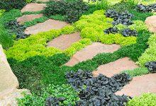 Les couvre-sols pour remplacer le gazon