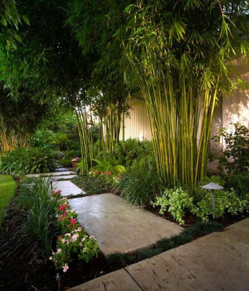 le bambou, une plante décorative