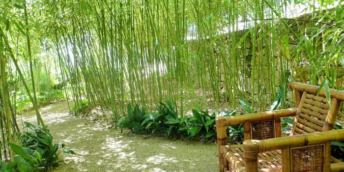 Deux variétés de plantes tropicales pour embellir le jardin