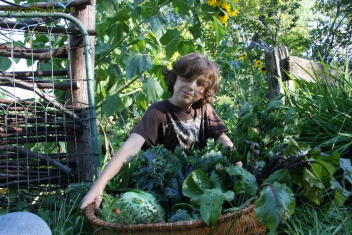 récolter les plantes