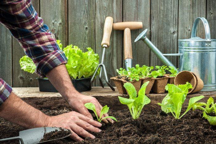 Planter des légumes