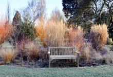 Comment avoir un beau jardin en hiver ?