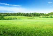 Clôture de jardin : les bonnes pratiques pour choisir