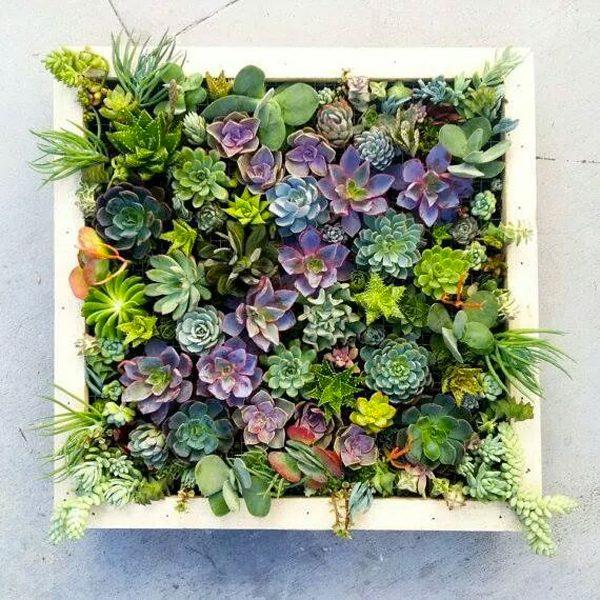 Cadres de plantes grasses